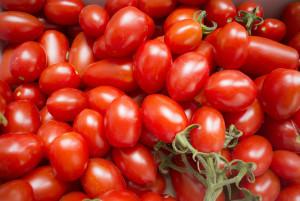 畑のトマトも完熟(アメーラトマトではありません)