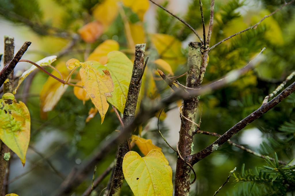色付き始めた葉も……