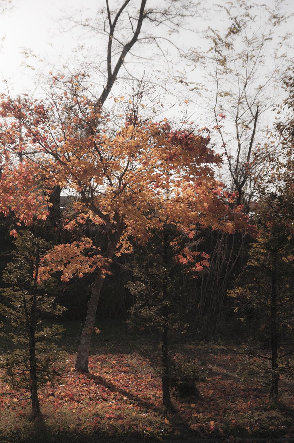 紅葉も終盤